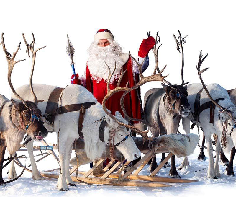 Immagini Di Renne Di Natale.Le Renne Di Babbo Natale In Piazza Della Repubblica Blu News